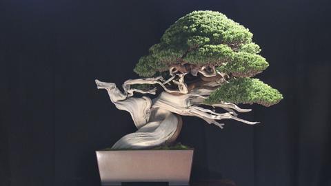 日本一の盆栽
