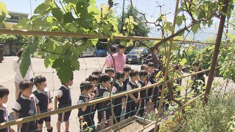 5月23日緑のカーテンと子どもたち