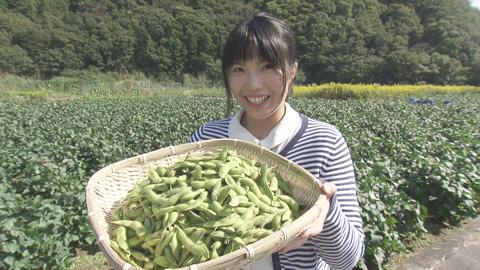 15あけぼの大豆