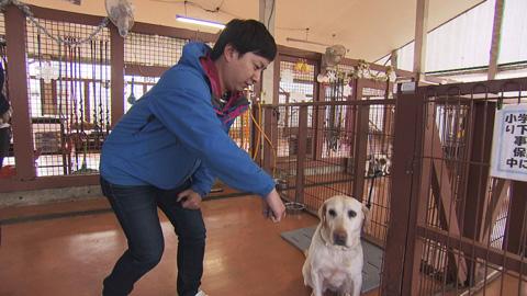 犬嫌い克服-(4)