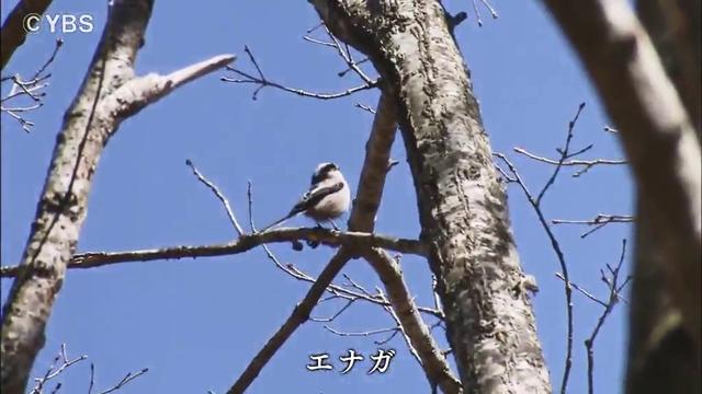 http://www.ybs.jp/tv/sanroku/images/190504_115633_08.jpg